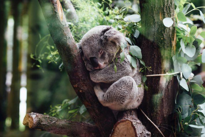 koala rentrée scolaire sommeil enfant shopping